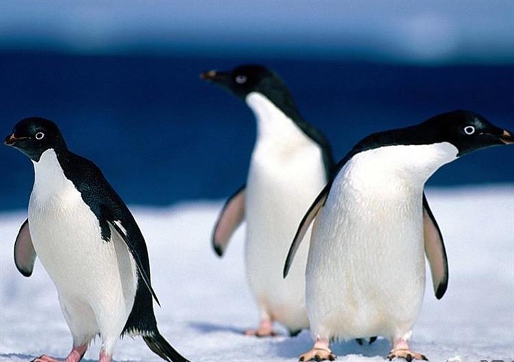 Kutuplardaki hayvanlar neden beyaz renkli