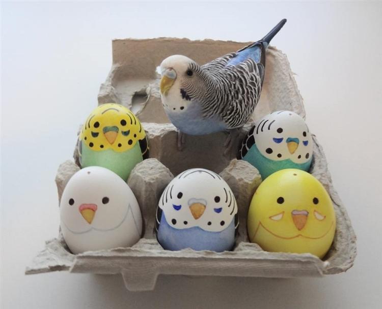 Kuslarin Yumurtlamasi Ne Zaman Olur?