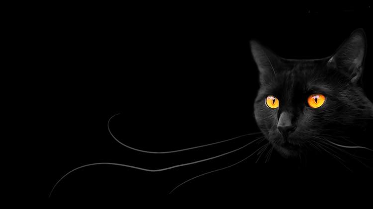 Kara Kedi Şanssızlığı