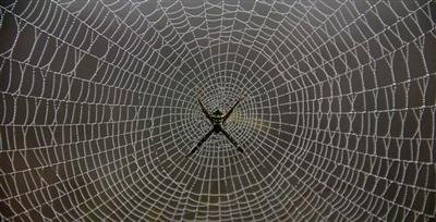 Örümcekler Kendi Tuzaklarına Düşmezler